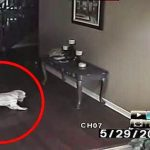A Man Thought His Home Was Haunted, So He Set Up A Camera. This Is What It Recorded (Video)